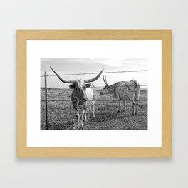 Longhorn Cows Framed Art Print