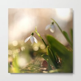 You And I Two Snowdrop Flowers #decor #society6 Metal Print