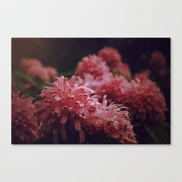 Pink Bellingrath Floral Canvas Print