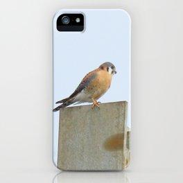 Sparrowhawk (Kestrel) Steel Span 11 iPhone Case