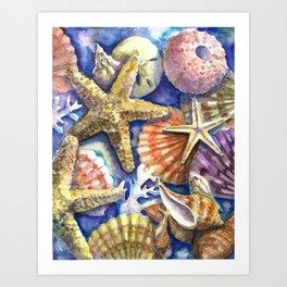 Seashells 2 Art Print