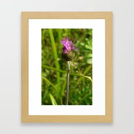 Carduus acanthoides plant, Dolomiti mountains, Italy I Framed Art Print