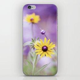 Purple Yellow Flower Photography, Purple Gold Green Nature Art Print, Daisy Floral Photo iPhone Skin