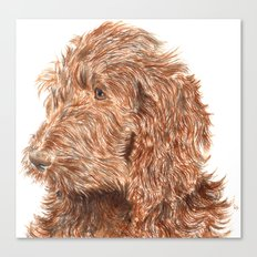 Chocolate Labradoodle Canvas Print