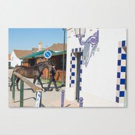 le cheval de Golega Canvas Print