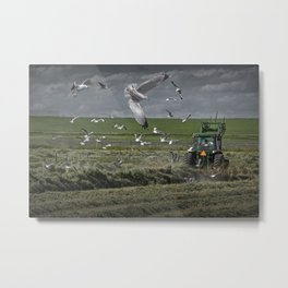 Gull chased Farm Tractor Metal Print