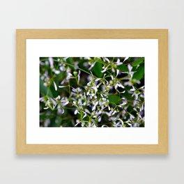 Jasmine Vine Framed Art Print
