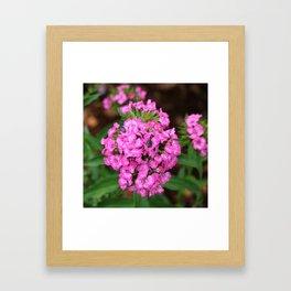 Pink Turkish Carnation Flowers and Visitors Framed Art Print