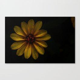 Rustic Sunflower Canvas Print