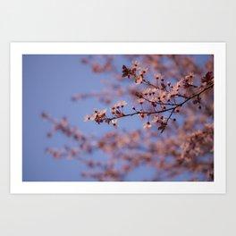 Prunus Art Print