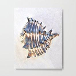 BEAUTIFUL BLUE SEA SHELL Metal Print