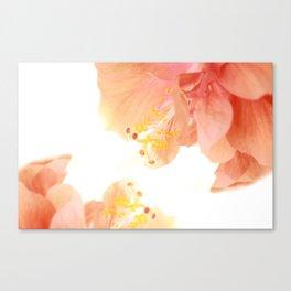 Double Orange Hibiscus Canvas Print