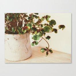 Interior decoration green plant Canvas Print