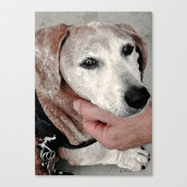 Portrait of a Dachshund Canvas Print