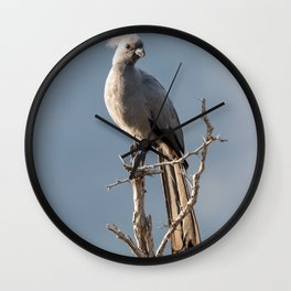 Grey Go-away bird Wall Clock
