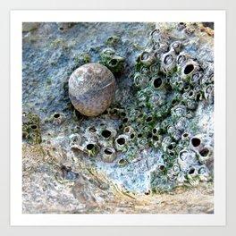 Nacre rock with sea snail Art Print