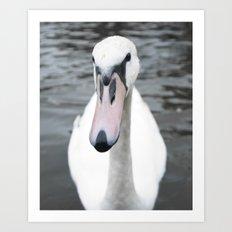 Swan Portrait 3 Art Print