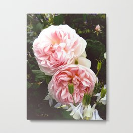 Roses III Metal Print