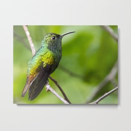 Coppery Headed Emerald Hummingbird Metal Print