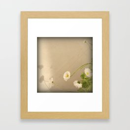 Daisy in the evening Framed Art Print