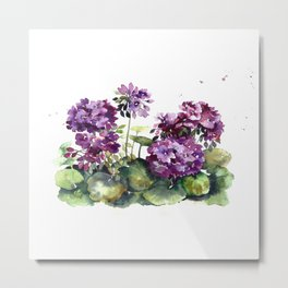 Purple violet pelargonium geranium flowers watercolor Metal Print