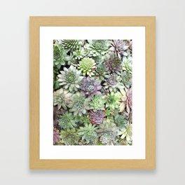 Desert Flower II Framed Art Print