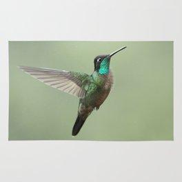 Male Magnificent Hummingbird in flight, in the Costa Rican rain Rug