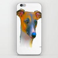 greyhound iPhone & iPod Skins featuring Greyhound by Marlene Watson