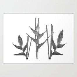 Three Heliconia black white Design Art Print