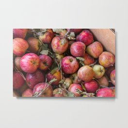 Pile of freshly picked organic farm apples with imperfections Metal Print