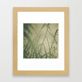 bamboos Framed Art Print