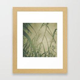 bamboos Framed Art Print