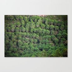 Young pine forest 6809 Canvas Print