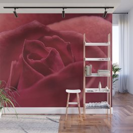 Red Rose Close Up Wall Mural