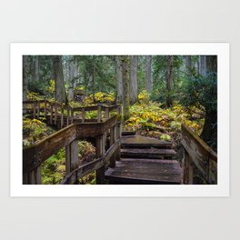 Giant Cedars Boardwalk in Revelstoke British Columbia, Canada Art Print