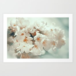 sakura cloud Art Print