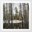 Snowy Forest Grammer by kevinruss