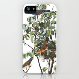 Blue grosbeak, Birds of America, Audubon Plate 122 iPhone Case