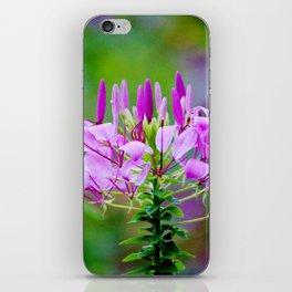 Purple Spider Flower iPhone Skin