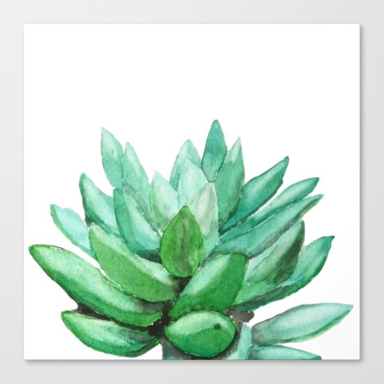 succulent echeveria Canvas Print