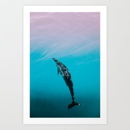 Cotton Candy Dolphin Art Print