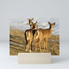 WHITE TAIL DEER (2 OF 3) - THREE IN THE SPRINGTIME Mini Art Print