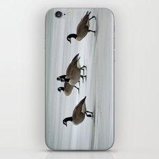 Graceful Geese iPhone & iPod Skin