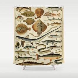 Fish Chart Shower Curtain