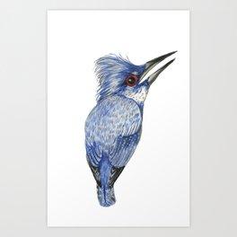 Blue cardinal Art Print