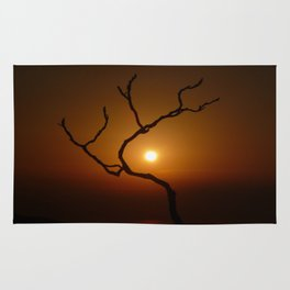 Evening Branch I Rug
