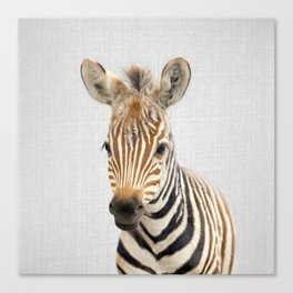 Baby Zebra - Colorful Canvas Print