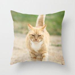 Ginger Cat Walking Throw Pillow