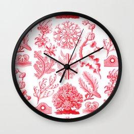 Ernst Haeckel - Florideae Wall Clock