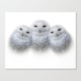 Mother Snowy Owl & Owlets Canvas Print